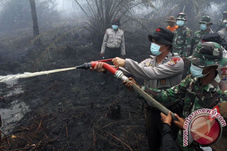 Take firm action against forest fire perpetrators