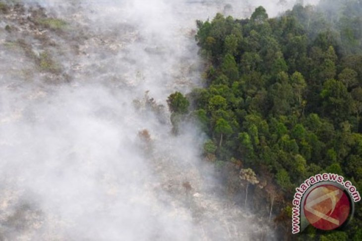 Number of Sumatra`s fire hot spots drops significantly