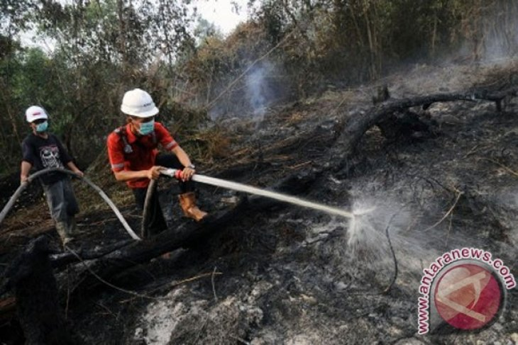 Foreign firms allegedly involved in Riau forest fires