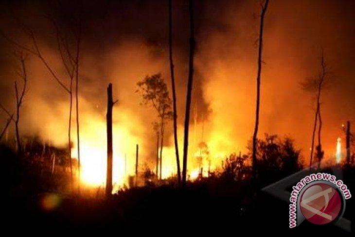 Tiga warga asing tersangka pembakar hutan