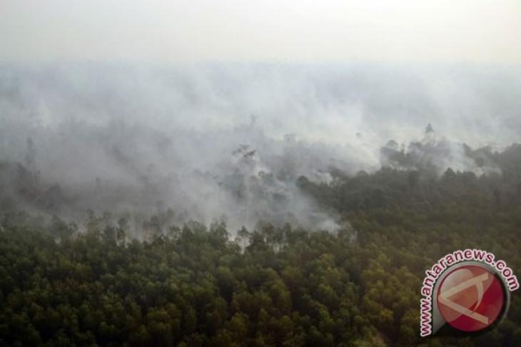 Haze forces temporary closure of schools in Pekanbaru