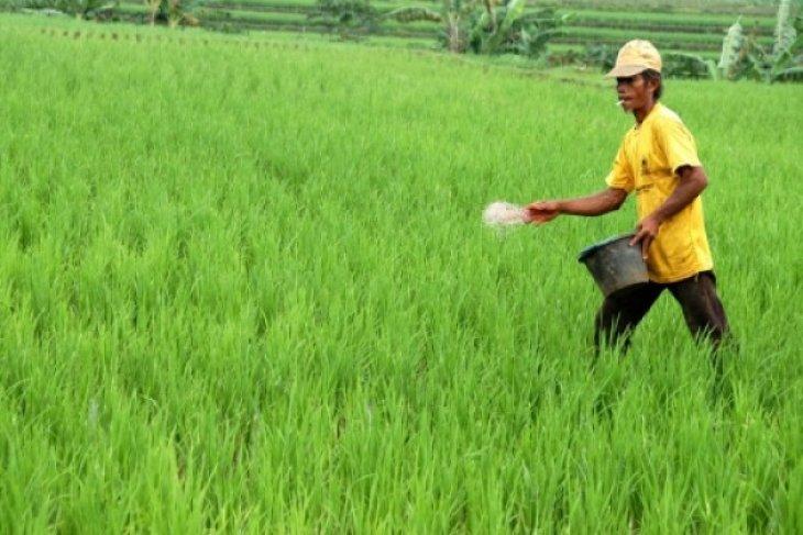 Petani Karawang belum menggunakan pupuk organik