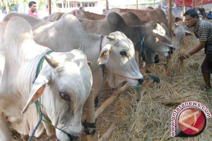 Harga sapi kurban di Kota Bogor naik