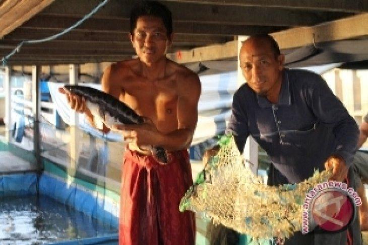 Warga Hulu Mahakam Kurang Suka Makan Ikan Toman
