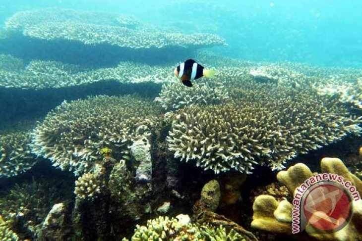 COREMAP establishes coral monitoring professional certification