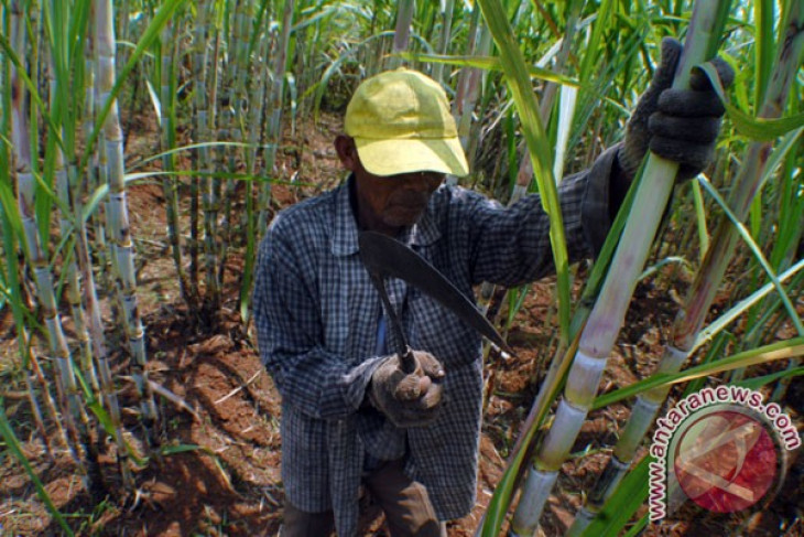 Foreign investors to build sugar factory in Central Aceh