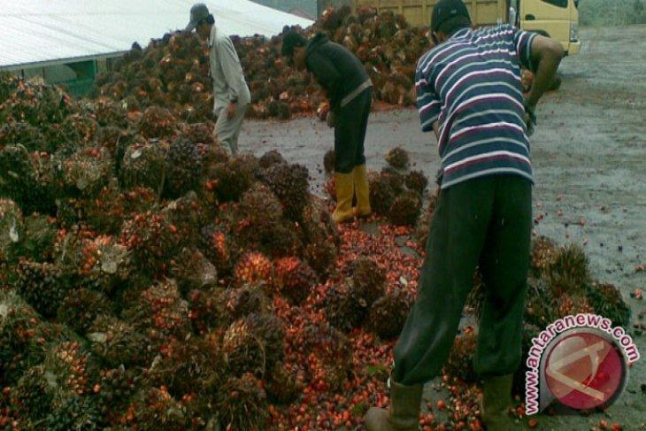 DPRD Kotabaru perjuangkan harga sawit petani
