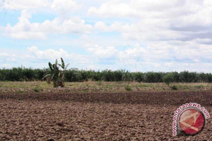 70 Hektare Sawah Dikonversi Menjadi Kebun Sawit