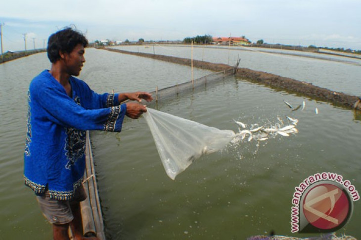 Ministry drafting master plan on national fish cultivation