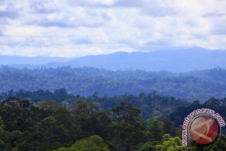 US, Indonesia cooperate to protect tropical forest