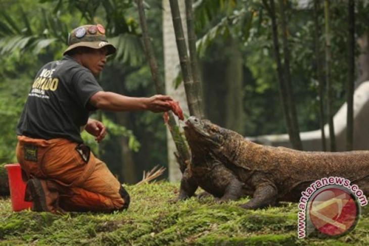 Surabaya to build komodo dragon park