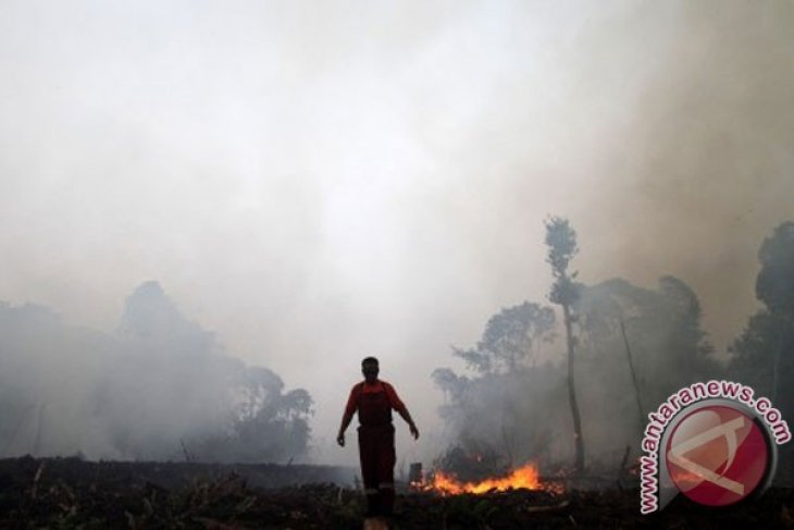 Law enforcement strengthened to tackle Sumatran forest fires