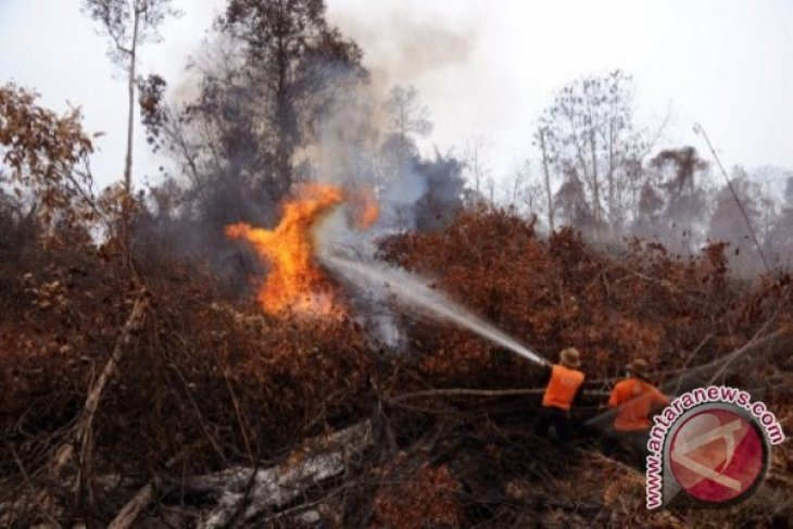 Polisi tangkap pembakar cagar biosfer Riau