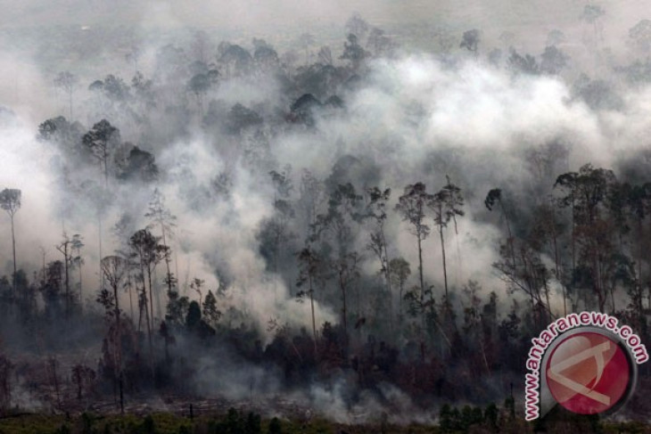 Racing against time to save Riau`s biosphere reserve from fires