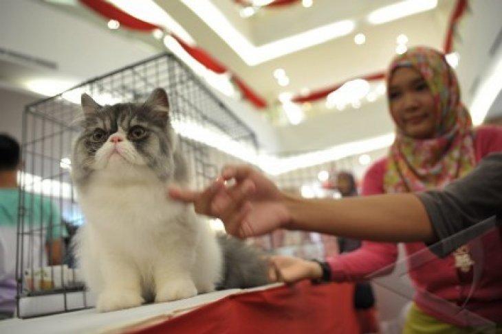 Kompetisi Kucing