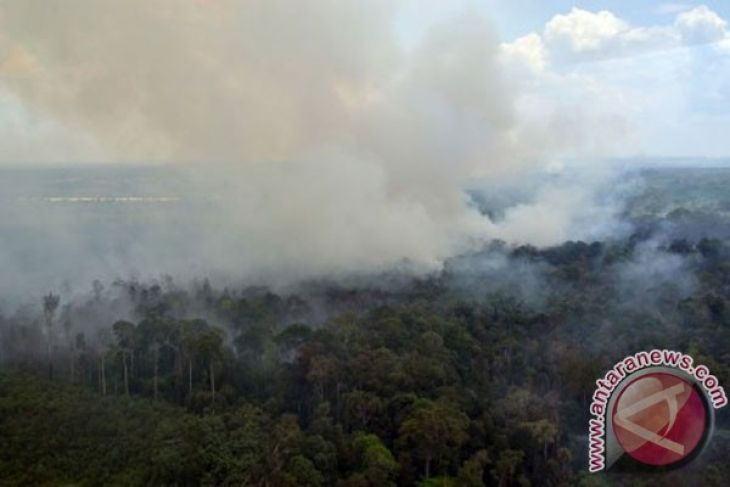Drought likely to trigger forest fires in Riau province