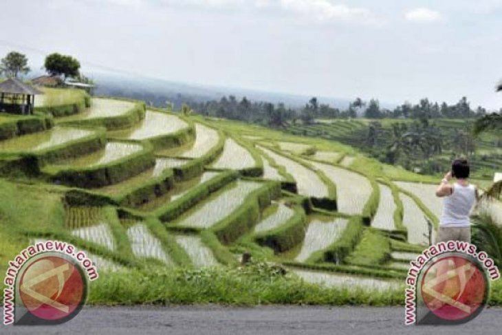 Festival Jatiluwih angkat tradisi seni petani Bali