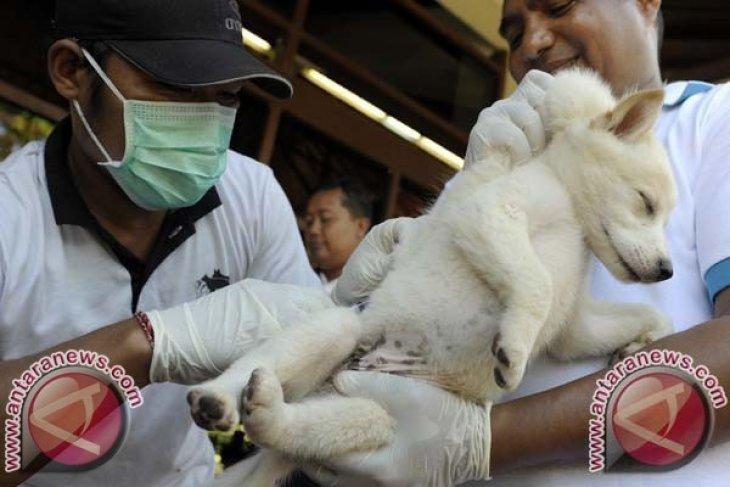 Dinkes Minta Bupati Tingkatkan Partisipasi Cegah Rabies