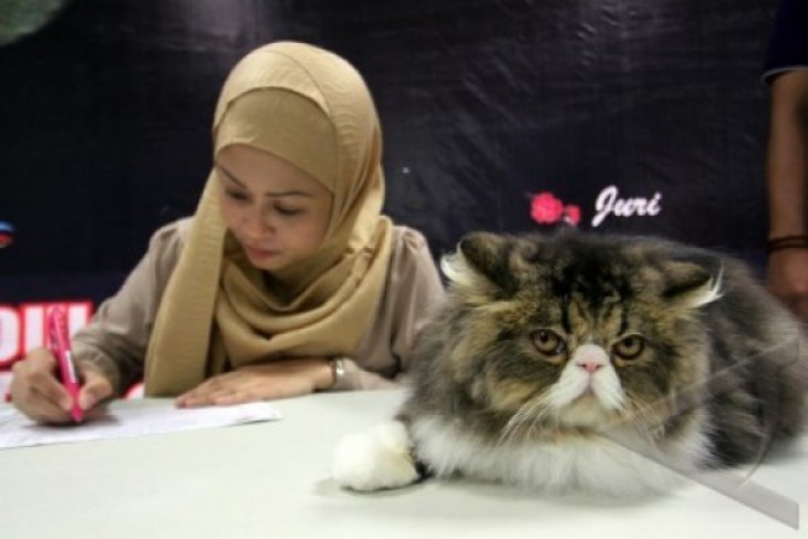 Kontes Kecantikan Kucing Tingkat Nasional