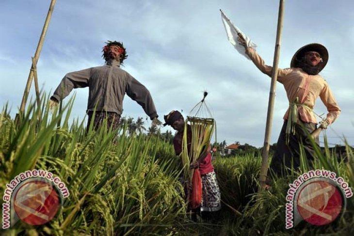 Deputi Kemenkop: Petani Indonesia Belum Nikmati Kesejahteraan
