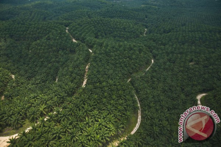 Moratorium on oil palm plantation permits aimed at resolving problems