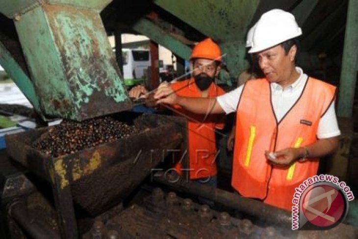 Harga TBS Sawit Di Kotabaru Turun