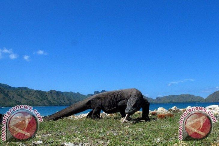 Peserta ITB Asia Minati Wisata Jelajah Komodo