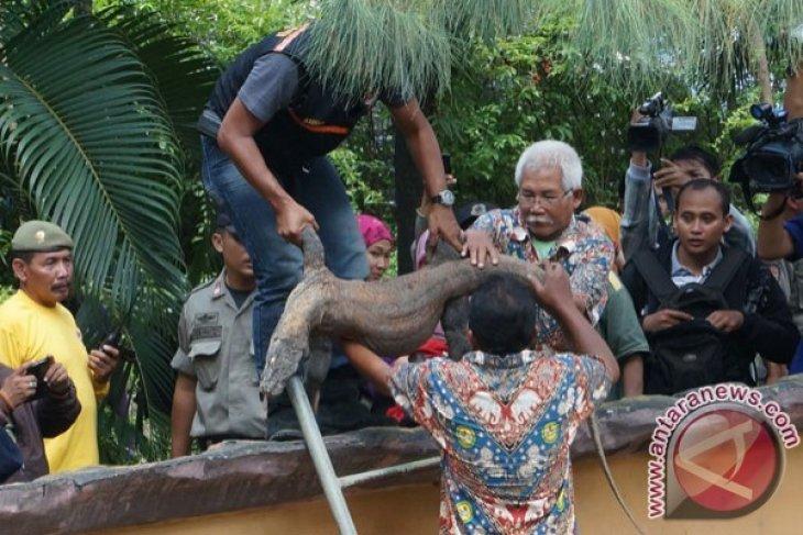 Komodo di Kebun Binatang Surabaya Mati