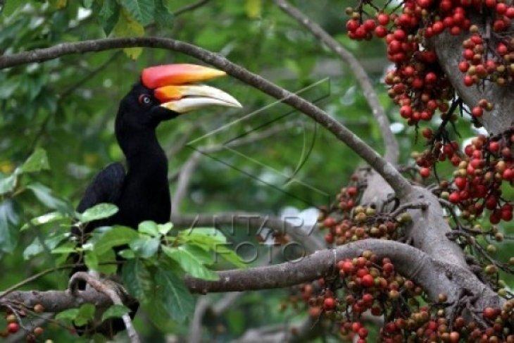 Uni Emirat Arab menyita 400 burung dilindungi