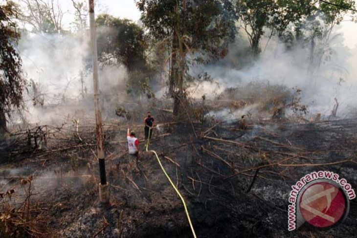 353 hotspots of forest fires detected in Sumatra