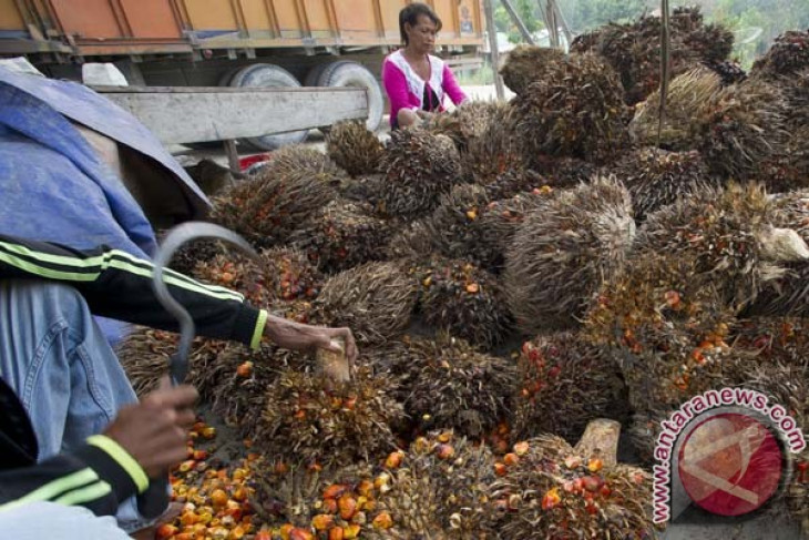 Experts to deliver palm oil business outlook at international conference