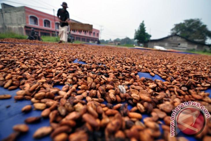 PTPN XII to supply cocoa to New Zealand