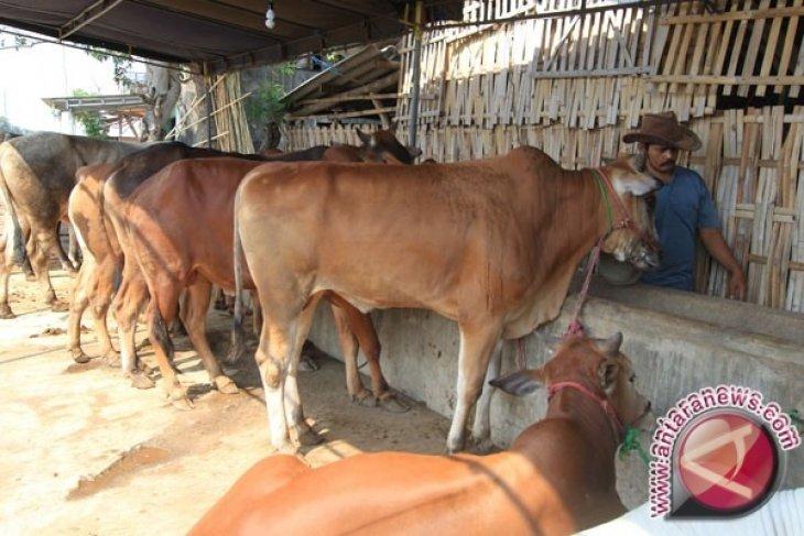 Disnakkeswan Gorontalo Utara Pantau Hewan Kurban