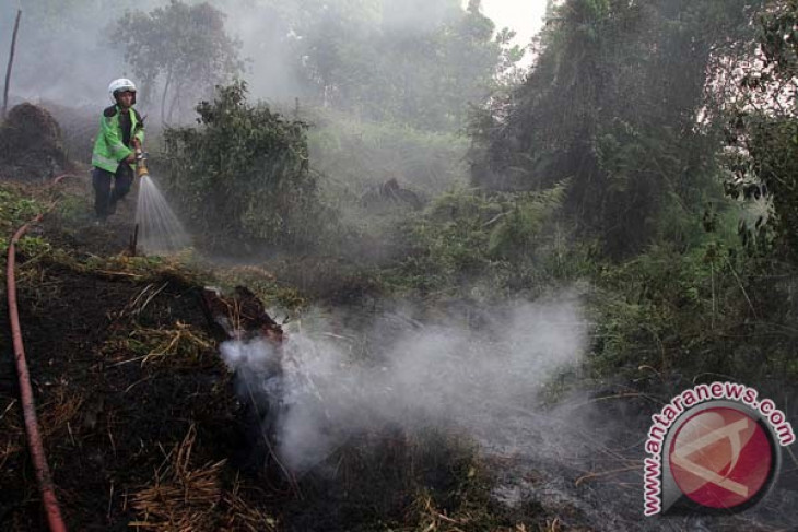 President Jokowi should take action against forest fire perpetrators