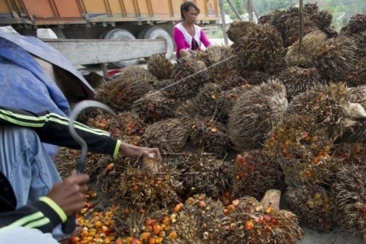 Dishutbun Banten Kembangkan Perkebunan Kelapa Sawit