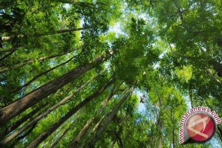 Green economy takes precedence in push for recovery
