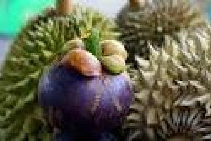 Pemprov Banten Tingkatkan Produksi Durian Dan Manggis