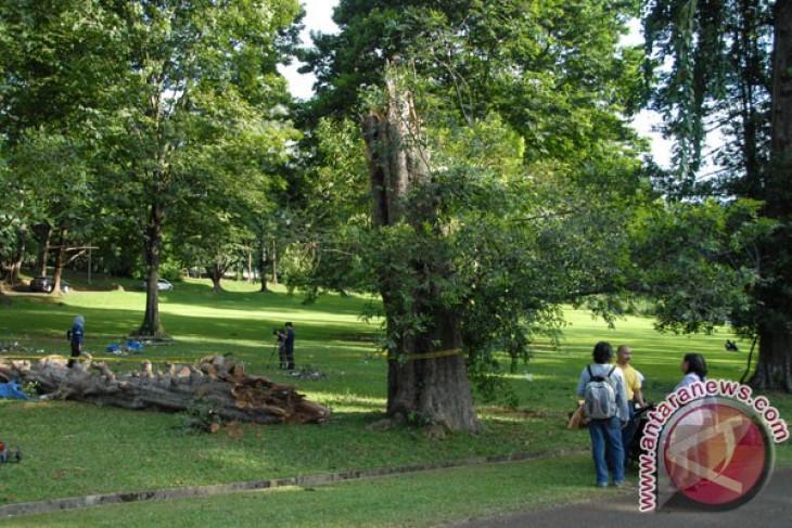 President wants Bogor botanical garden more attractive