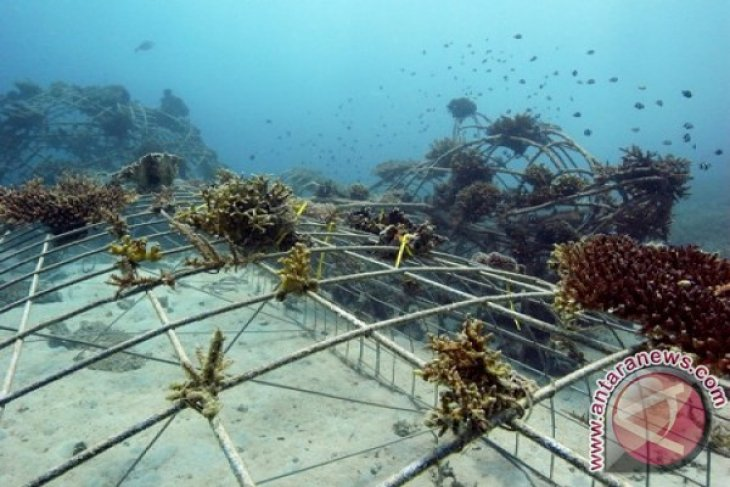 Konservasi Lingkungan Kelautan Sepenting Pemberantasan Pencurian Ikan