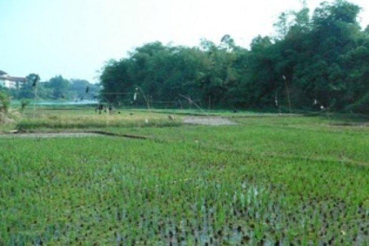 Pemerintah Berikan Lahan Garapan Korban Konflik Agraria