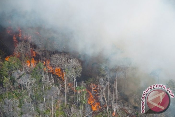 Riau authorities extinguish 10 bushfires