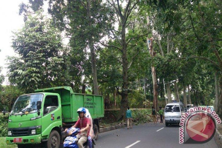 DKP Bogor Gandeng Swasta Lakukan Tebang Pohon