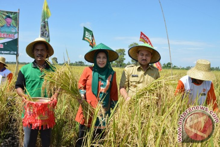 Gambut Harvest Support National Food Self-Sufficiency