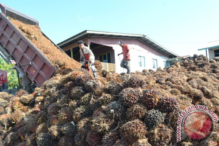 CPO price set higher in Jambi