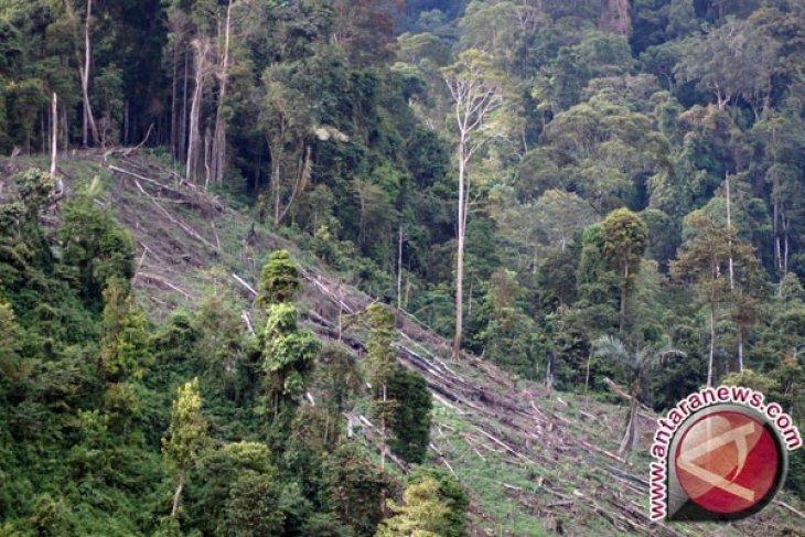 Perambah hutan lindung di Bengkulu Tengah diamankan