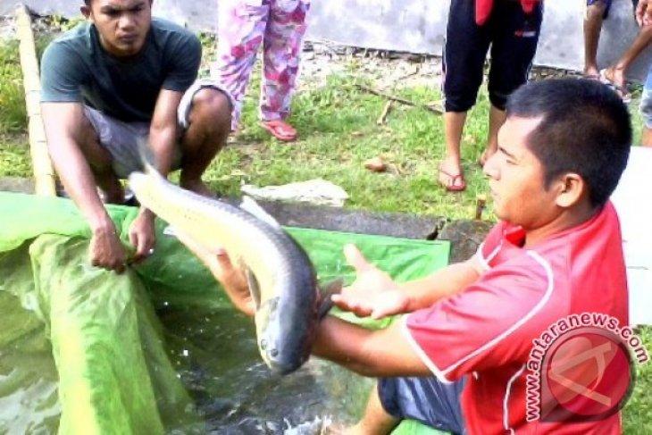 Pemkab Nagan Raya kembangkan budidaya ikan kerling