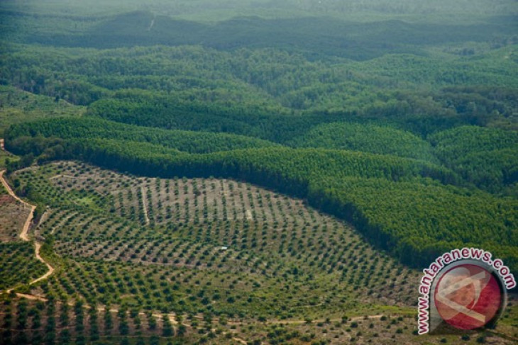 RI to prioritize trade diplomacy for palm oil