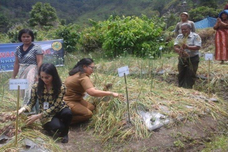 BI Bantu Dorong Produksi Bawang Merah Sumut