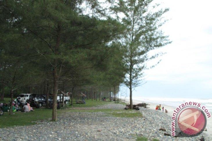 Warga Mukomuko tanam cemara di pantai kritis