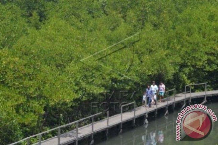 Ada Wisata Jelajah Hutan Mangrove Di Demak
